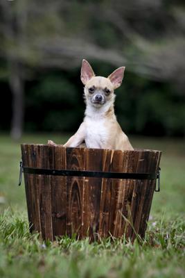 NQAR Dogs Park-022