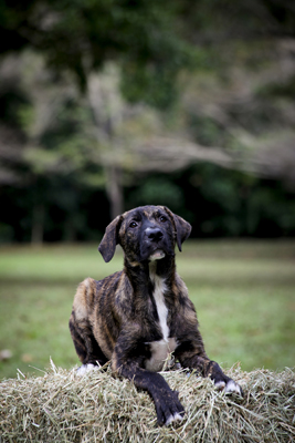 NQAR Dogs Park-085