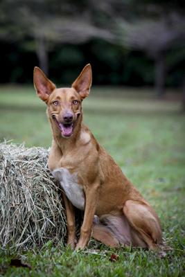 NQAR Dogs Park-094