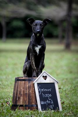 NQAR Dogs Park-126